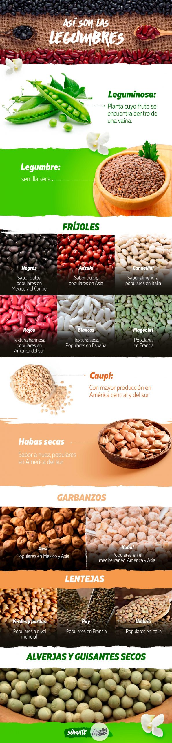 infografia legumbres