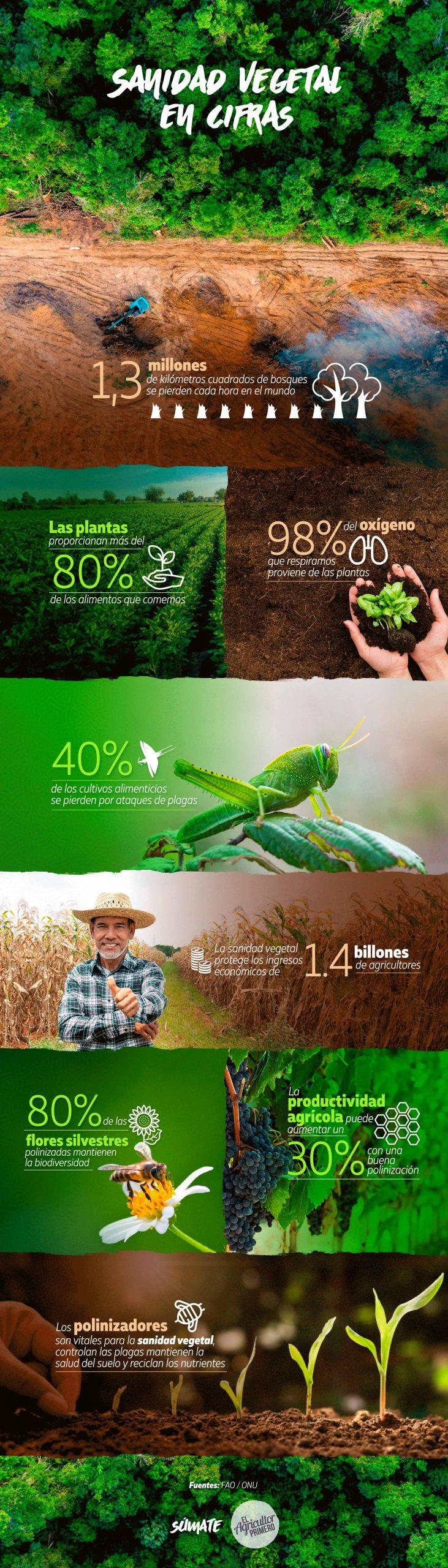 infografia sanidad vegetal