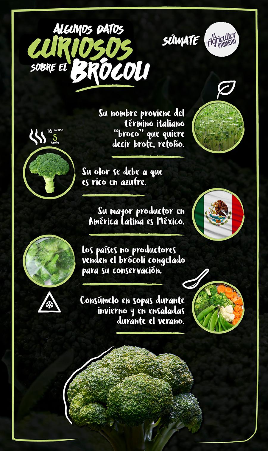 Infografia brocoli